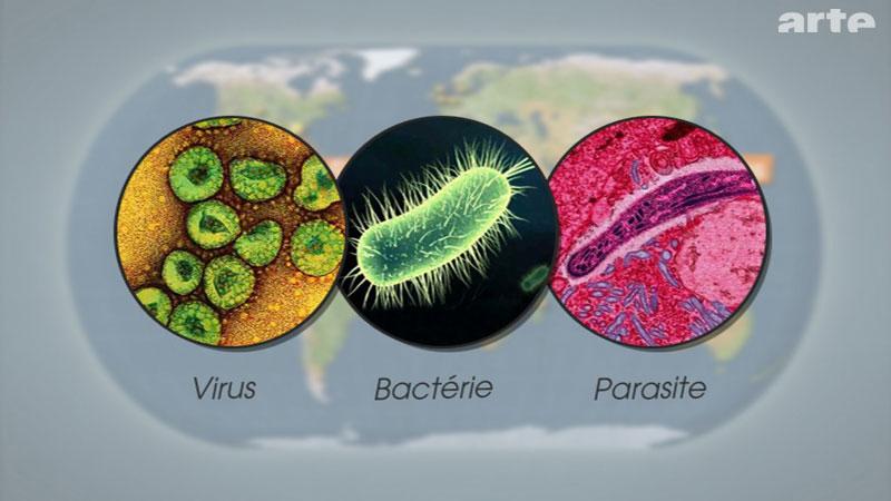virus et bacterie